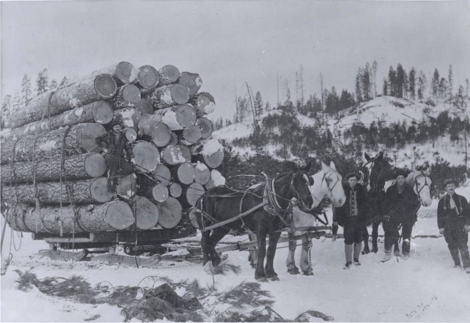 item thumbnail for Sleigh Loaded with Logs [05]