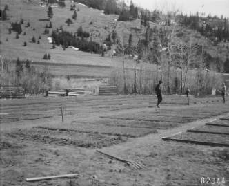 &#34;Helena General view of Boulder Nursery, showing seed beds + their arrangement.&#34;<br&gt;241