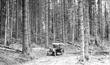 &#34;100-yr-old pure western white pine stand near Pierce, Idaho.&#34;<br&gt;796